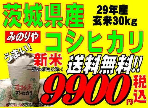 新米29年産 茨城県産コシヒカリ玄米30kg送料無料 無料精米 【あす楽_土...