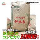 新米【精米無料】【特別栽培米】令和3年産 新潟県産こしいぶき玄米30kg 【送料無料】