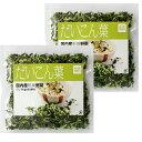 【熊本県産大根葉100%使用】ドライ野菜(乾燥野菜)大根葉2袋セット【国産野菜100%】40g入り