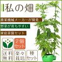 【2個セット】【私の畑】家庭菜園セット 家庭菜園キット 栽培...