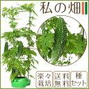 【送料無料】家庭菜園セット 特許技術のエクセルソイル使用! ...
