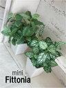 **グリーンホワイトミニフィットニア H18【造花】【フェイクグリーン】【光触媒/CT触媒】
