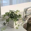 シサスアイビー シュガーバインプラント 四角鉢皿付 観葉植物 造花 インテリア 光触媒 CT触媒 ミニ フェイクグリーン 葉っぱ