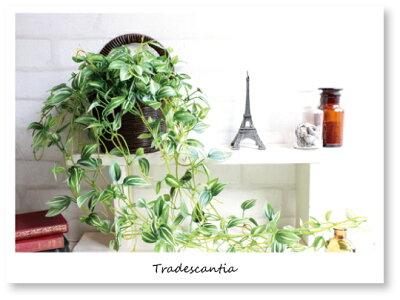 Tradescantia*トラディスカンティアハンギング*グリーン造花光触媒CT触媒