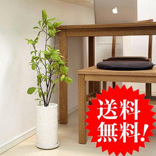 ドッグウッド ハナミズキ H75 貫入鉢皿付 k-70 造花 インテリア 観葉植物 大型 フェイクグリーン ...