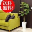 ウンベラータ130cm 白スクエア皿付 k-12 造花 観葉植物 インテリア フェイクグリーン 大型 送料無料