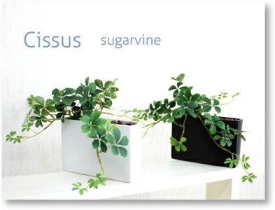 ミニ観葉植物シサスプラントオシャレな長方形タイプ【造花】【光触媒/CT触媒】