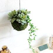 ハンギングモスボール サキュレント グリーン ネックレス 多肉植物