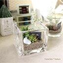 テラリウム セダム Terrarium 多肉植物 フェイクグリーン 造花 インテリア