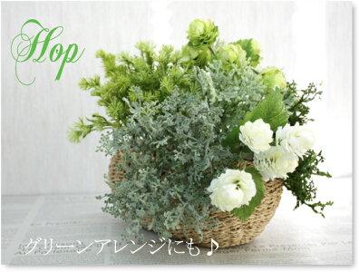 ホップピック・ホワイト♪1本【造花・未触媒】