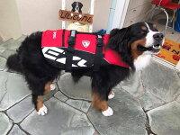 EZYDOGイージードッグフローティングジャケットDFD犬用ライフジャケット