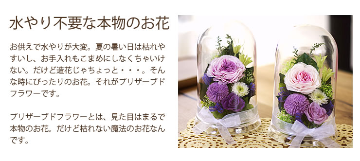 ナチュラルプリザminyong(ミニョン)『清花ドーム(きよかドーム)』