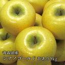 送料無料 青森県産 葉とらずシナノゴールド ご家庭用5kg (約14〜18個)人気の訳ありリンゴ 青森産 訳あり