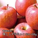 送料無料 青森県産 葉とらず早生ふじ ご家庭用10kg (約28〜36個)人気の訳ありリンゴ 昂林 青森産 訳あり サンふじ