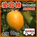 (予約11月20日以降?)大箱10kgで送料無料・愛宕柿(干し柿用)渋柿・大箱10kg・愛媛産・ご家庭用