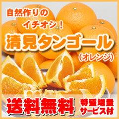 【1箱より送料無料】大人気の定番オレンジ訳あり清見タンゴール自然作りで味の均一必見複数ご注文で…