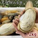 貝 ミル貝 みる貝 お刺身 天然 活みる貝 小2kg【愛知県三河湾産】