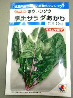 ホウレンソウ種早生サラダあかり(10ml)ほうれんそう ほうれん草 法蓮草