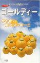 ズッキーニ種ゴールディ(卵型ズッキーニ)(10粒)
