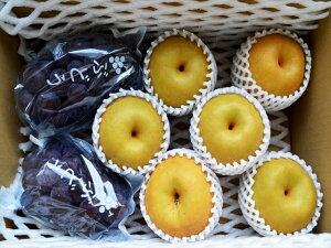 宮崎産★朝穫れたての新鮮なブドウ、梨を当店が厳選した農家さんからその日のうちに仕入れ、出...