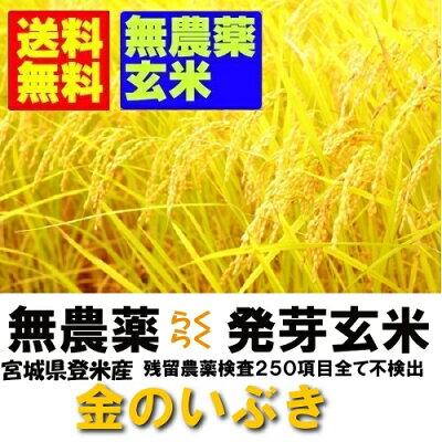 瑞穂の国の楽々発芽玄米(金のいぶき使用)