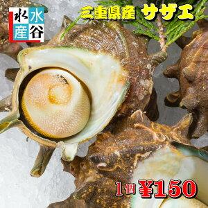 サザエ最安値に挑戦 活サザエ 海鮮バーベキューに! さざえ つぼ焼き 貝類 バーベキュー BBQ