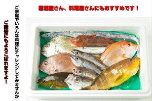 お客様評価4.8以上!!三重県産天然季節の鮮魚セット熊野灘熊野魚セット下処理OK3枚卸しOK