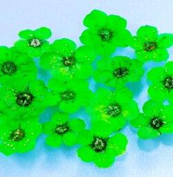 天然押し花《ネイルアート(画像)用フラワーパーツ》グリーン約8ミリ15枚入 激安