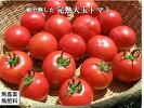 自然栽培・自然農法プラチナ樹で熟した完熟トマトセット3kg(24〜27玉)