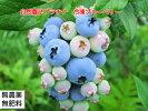 自然栽培・自然農法冷凍ブルーベリー(1kg)