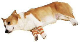 ペティオずっとね 老犬介護用 床ずれ予防サポーター 中(全犬種用)4個入