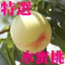 【送料無料】◎岡山県産・水蜜桃(白鳳種)特選 7個〜8個 2kg 【smtb-kd】【10P24jul13】
