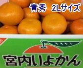 フルーツ・果物, みかん  2L 10kg