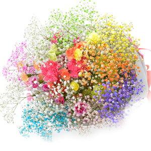 サプライズギフトに最適。7色のロマンチックかすみ草。カーネーション。≪七色に輝く≫プレゼン...