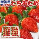 いちご 苺 ホール詰め 600g x 1箱 (贈答用) /栃...