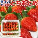 いちご 苺 ぎっしり詰め1kg(500g x 2箱) /栃木...