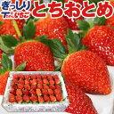 いちご 苺 ぎっしり詰め1.2kg x 1箱 /栃木県産 と
