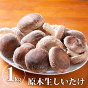 【送料無料】原木生しいたけ さまざまな味わい方が出来る 椎茸 シイタケ 野菜 きのこ キノコ 茸【WS】