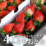 【送料無料】とちおとめ4パック(貞ちゃんいちご)【TSM】
