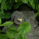 置物 茶玩 紫砂 石の上のカエル 陶磁器製 ミニサイズ