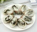 食品サンプル 牡蠣 殻付き 5個セット