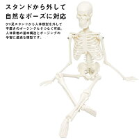 人体骨格模型骨格標本稼動直立スタンド教材45cm1/4モデルホワイト(台座・三つ足)