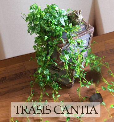 【トラディスカンティア】観葉植物フェイクグリーンインテリア雑貨みどりの雑貨屋おしゃれエアープランツ模様替えイミテーション壁掛けギフトプレゼント売れ筋