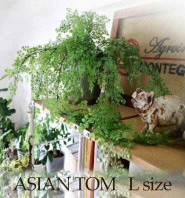 【アジアンタムL】観葉植物フェイクグリーンインテリア雑貨みどりの雑貨屋おしゃれエアープランツ模様替えイミテーション壁掛けギフトプレゼント売れ筋