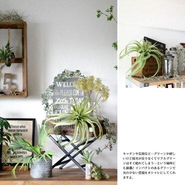【ティランジアLサイズ】【みどりの雑貨屋】観葉植物フェイクグリーンインテリア雑貨おしゃれエアープランツ模様替えイミテーション壁掛けギフトプレゼント売れ筋