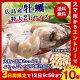 【SPエントリーでPT10倍確定!】牡蠣 カキ かき【送料無料】 大粒2L 広島県産! 約…
