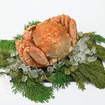 毛ガニ 超特大1尾 約1.4kg ロシア産 ( 毛蟹 けがに ケガニ 毛ガニ かに カニ 蟹 ) ギフト 送料無料 冷凍便