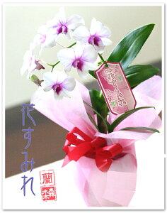 白いお花にピンク色が映えます☆
