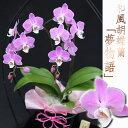 特別な母の日ギフトとしてお花に詳しいお母さんお義母さんに! 超のような優しいピンク花を長...