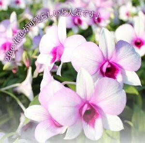 花すみれのお色の濃淡は季節によって異なります★